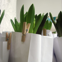 ::eco friendly favor - hyacinth